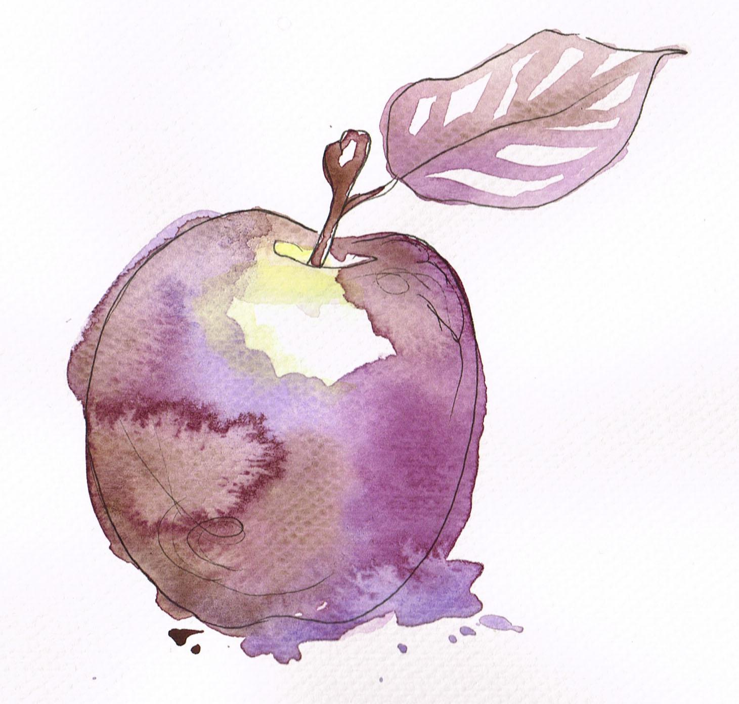 Lilla akvarell eple