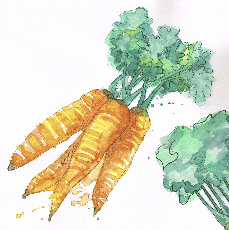 Akvarell gulrøtter