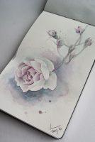 Akvarell skisse av en rose
